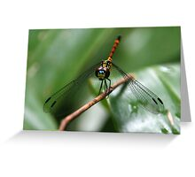 Ready for My Closeup! Greeting Card