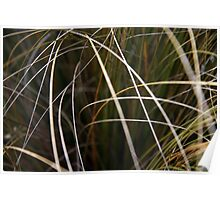 Abstract of Grass Poster