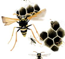 Wasps by Arthropodart