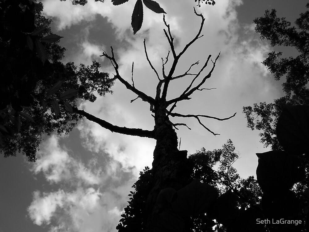 Wicked Tree by Seth LaGrange