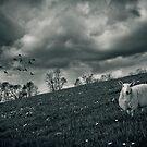 Sheep by Laurent Hunziker