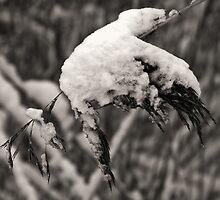 Dead by winter by Britta Döll