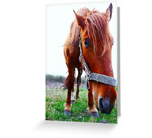 Funny horse in  field Greeting Card