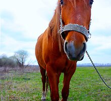 Funny horse by a1luha
