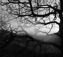 Shadows of tree branches by Matthew King