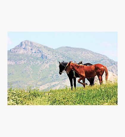 Black and red horses in the mountains Photographic Print