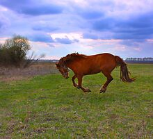 Horse Grazing in field  by a1luha