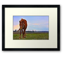 Horse Grazing in field  Framed Print