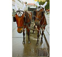 Vienna horses Photographic Print