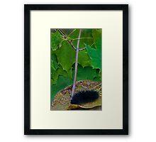 chillin caterpillar Framed Print