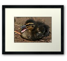 Cute Chick Framed Print