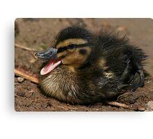 Cute Chick Canvas Print
