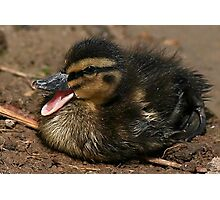 Cute Chick Photographic Print