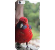 Crimson Rosella, Tambourine Mt Queensland iPhone Case/Skin