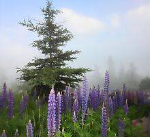 Lupines in Fog by by M LaCroix