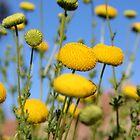 Yellow Pom Pom's by Vanessa  Warren