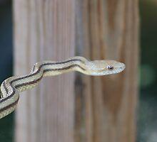 sneaky snake by jdadkin