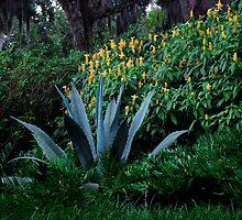Century Plant by michaelBstone