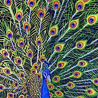Peacock I by Rhonda  Anderson