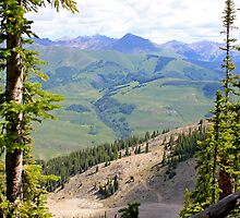 Crested Butte Trees by ashley-dawn