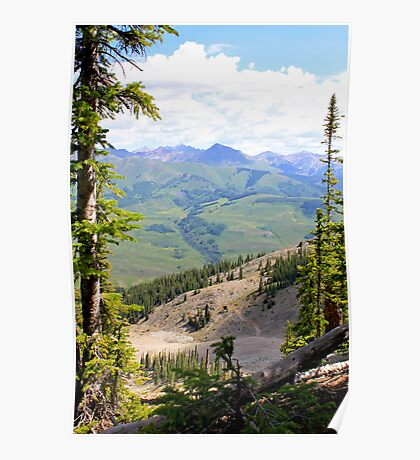 Crested Butte Trees Poster