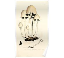 Coloured figures of English fungi or mushrooms James Sowerby 1809 0371 Poster