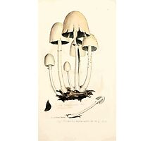 Coloured figures of English fungi or mushrooms James Sowerby 1809 0371 Photographic Print