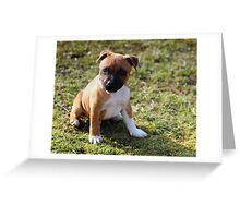 Staffordshire Bull-Terrier Puppy Greeting Card