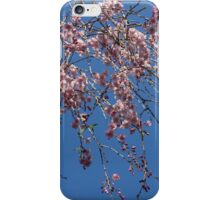 Pretty in Pink - a Flowering Cherry Tree and Blue Spring Sky iPhone Case/Skin