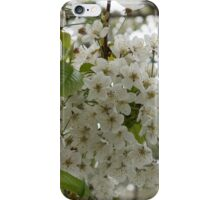 Springtime Dreams - Masses of White Blossoms iPhone Case/Skin