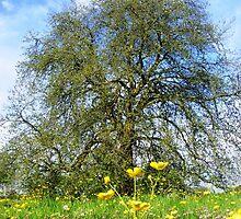 springtime comparisons  by james upton
