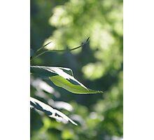 Sunlight Capture Photographic Print