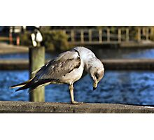 Down And Out In Cedar Key Photographic Print