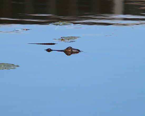 Lurking gator by jozi1