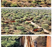 A COLLAGE ON AERIAL CAPTURES ... How wild- animals gets re-located by Magaret Meintjes