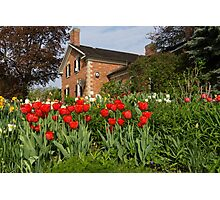 Tulip Garden - Marvelous Spring Flower Beds With Red Tulips and More Photographic Print