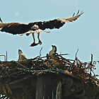 Osprey and Sushi #4 by Carl LaCasse