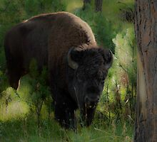Bison in Forest by Mary Ann Reilly