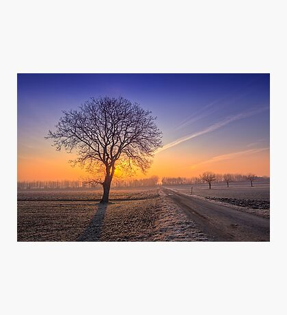 ~Frosty Morning~ Photographic Print