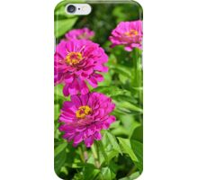 Purple zinnia flowers iPhone Case/Skin