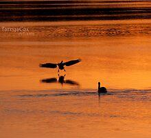 woah, here I come - pelican landing! by tarnyacox