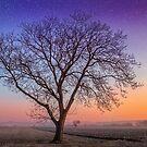 Make a wish upon a tree by Delfino