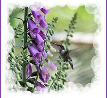 Hummingbird song by DIANE KLEVECKA