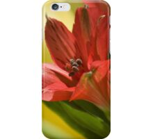 Summer Display iPhone Case/Skin
