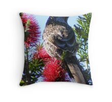 Wattle Bird on Bottle Brush.  Throw Pillow