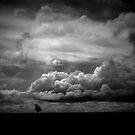 Lone Tree Hill by Pene Stevens