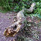 Fearsome Serpent (decaying fallen branch) by armadillozenith