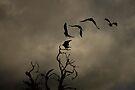 As the Crow Flies by Pene Stevens
