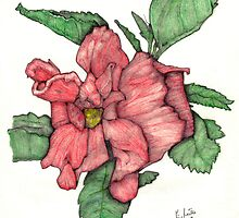 Contour Double Hibiscus by eruthart