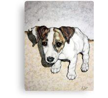 Dixie Belle Canvas Print